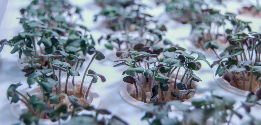verdura-fresca-serra-indoor-02